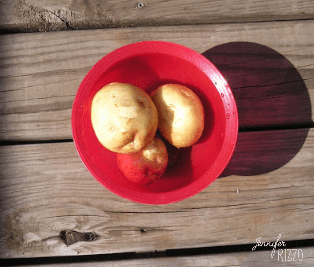 Home grow potatoes in a bowl