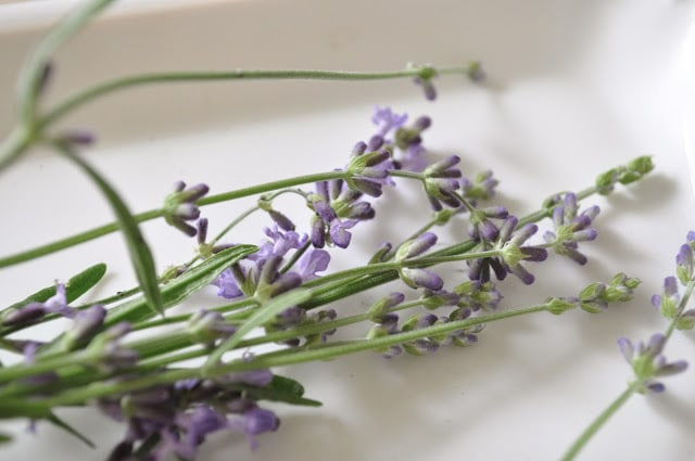 How to grow and dry lavender