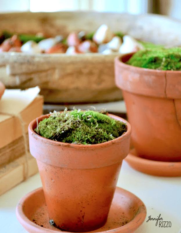 Live moss in terra cotta pots