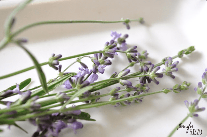 Lavender in a tray