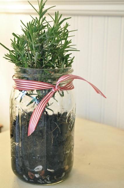 Christmas tree in a jar…