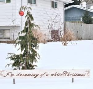 Jennifer Rizzo's charlie brown tree-Alaskam Cedar
