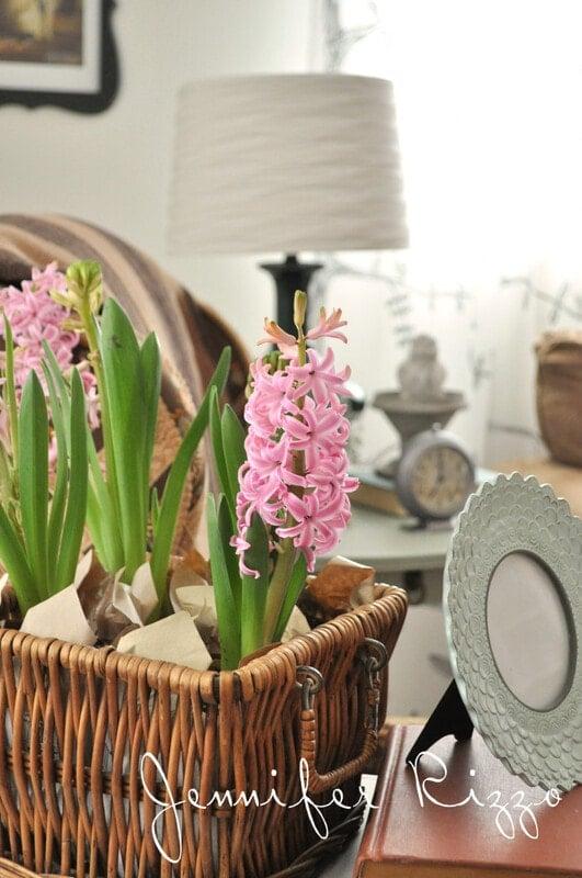 Fresh hyacinths in a basket