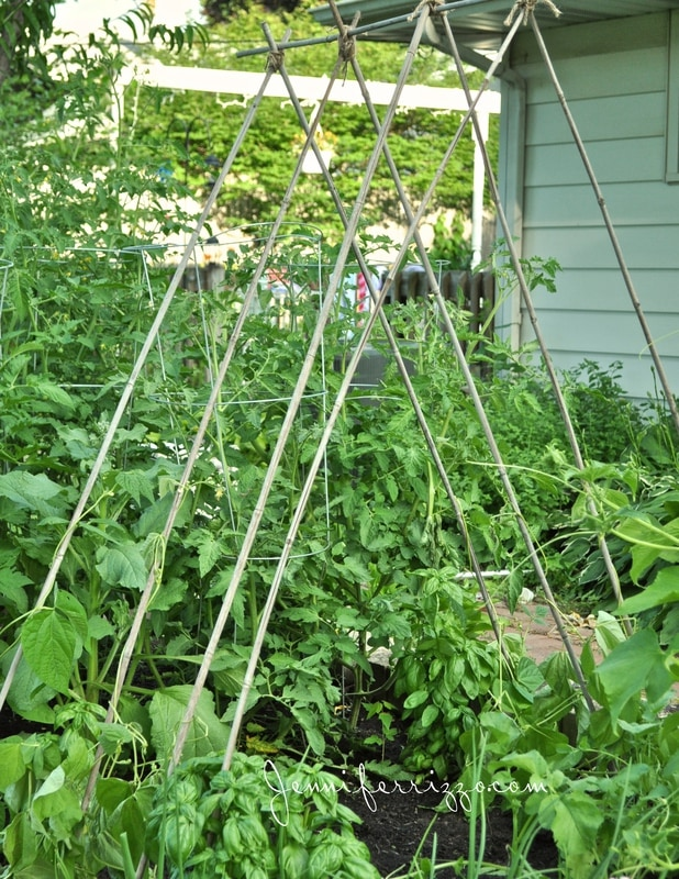 How to Build a Green Bean Tent…