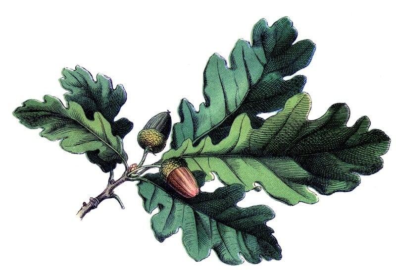 Oka leaf image from Graphics Fairy