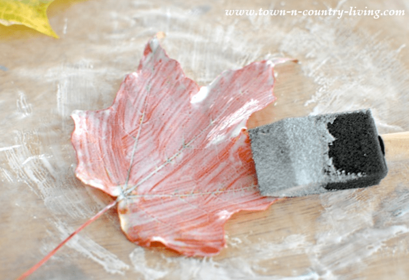 Paint the leaf with mod podge to preserve it