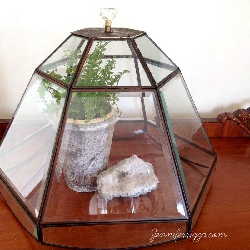 Repurposed glass lamp shade into DIY terrarium cloche