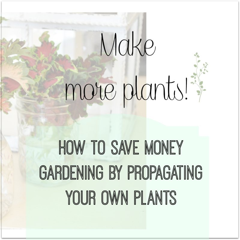 Make more plants! Flowers and plants you can propagate