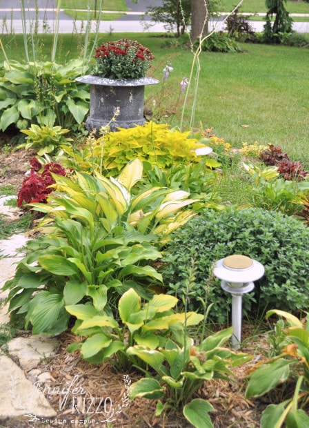 Hosta and coleus for Fall landscaping