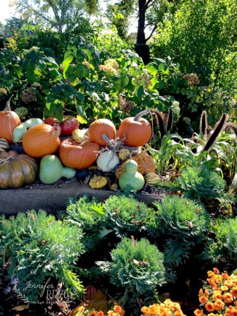 Gourds and mums for fall display