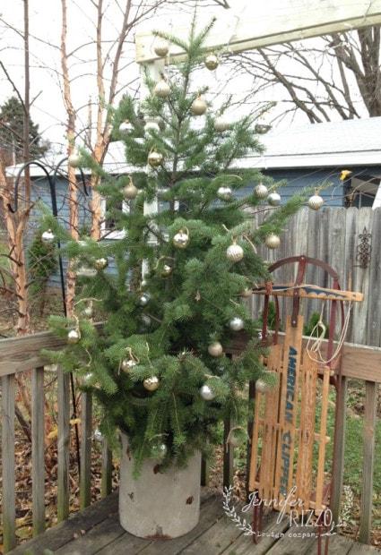 Tree on back deck
