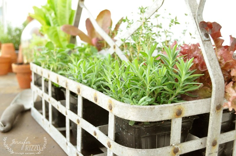 Creative plant and flower container ideas
