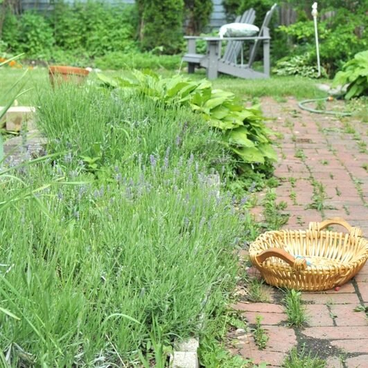 relcaimed brick path with lavender