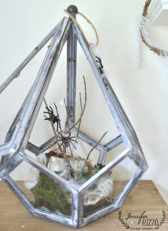 spider habitat terrarium