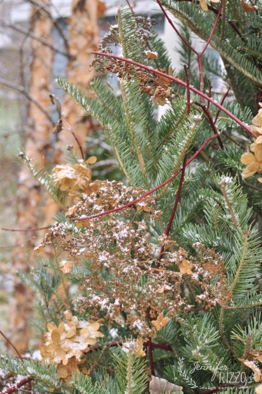 Hydrangeas and dogwood twigs to decorte with