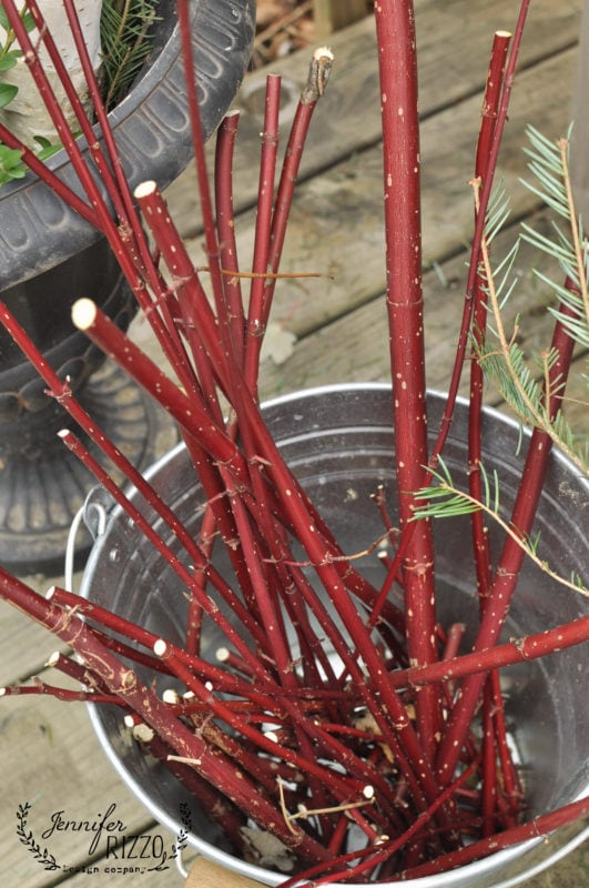 Red twig dogwood in galvanized bucket