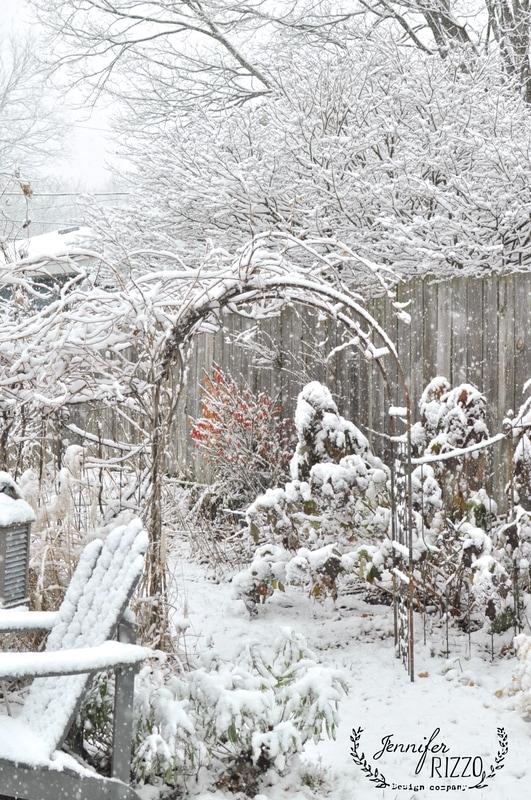 Plants for a winter cutting garden