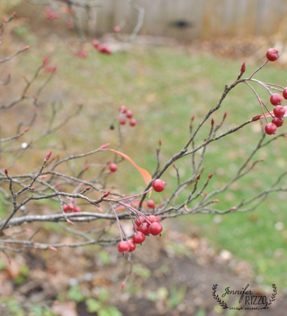 Viburnum in winter