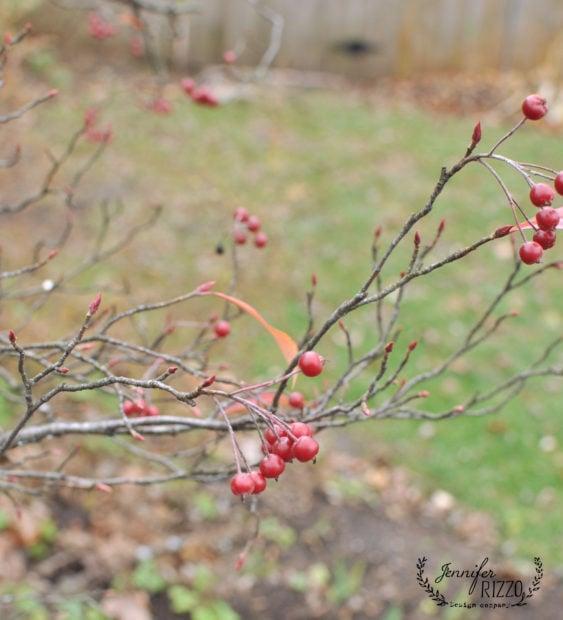 Plants For A Winter Cutting Garden Jennifer Rizzo