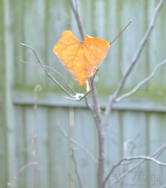 Redbud fall heart leaf