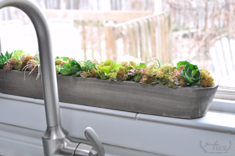 Succulent windowsill planter in wood trough