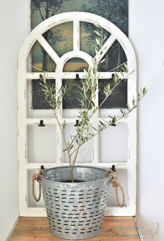 Buy an olive tree from a nursery as an indoor house plant