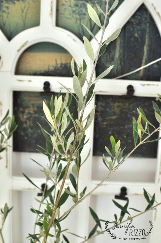 Buy an olive tree at a nursery for a house plant