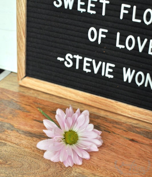 SIngle flower on wood