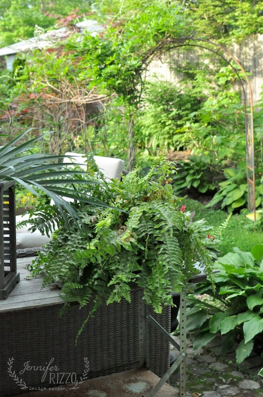 Ferns in outdoor area