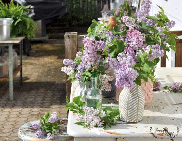 Lilacs in boho vases late blooming varieties