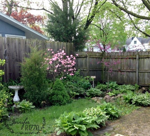 Garden view with flowering dogwood, junpier and Forest Pansy redbud