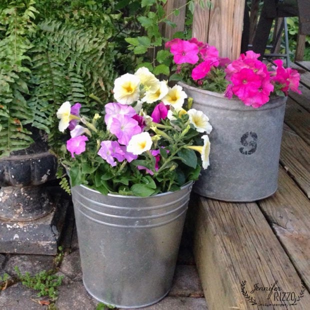 Flowers in buckets