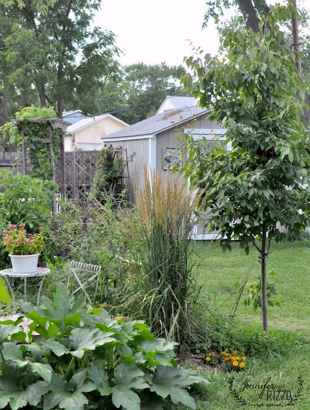 Backayrd landscaping