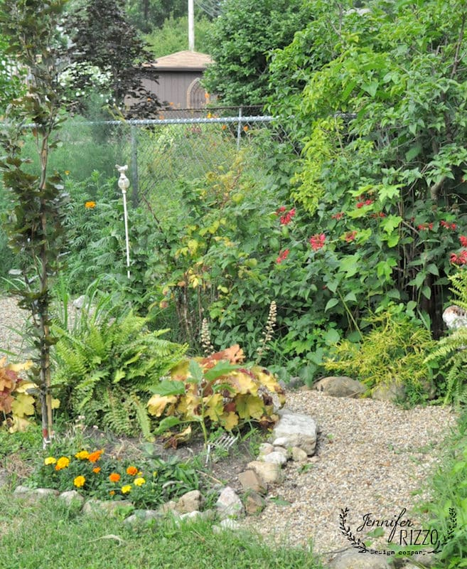 pea gravel path with raspberry patch