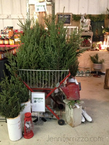 Spruce tips holiday show display