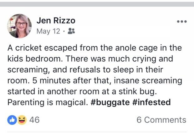 Escaped Anole.Things I post on Facebook Jennifer Rizzo