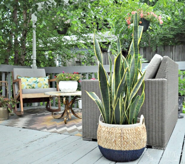 Snake plant in a boho dip-dyed basket painted with a sprayer by Jennifer Rizzo