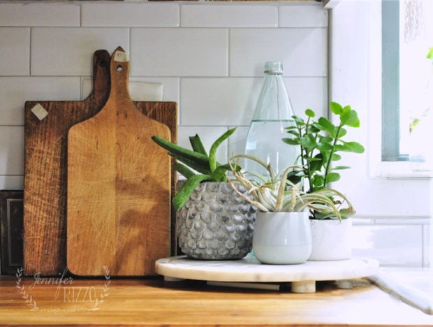 Plant vignette on wood countertop Jennifer Rizzo