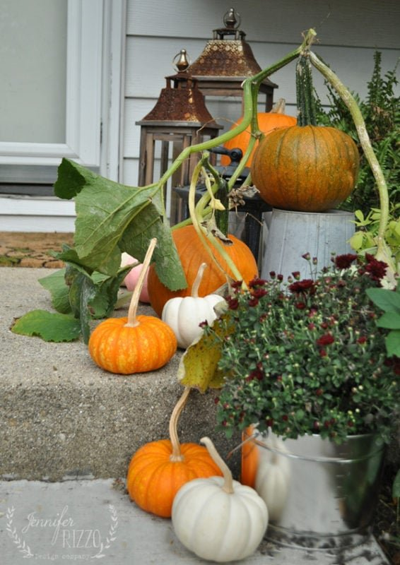 Pumpkins still on the vine as fall decor Jennifer Rizzo