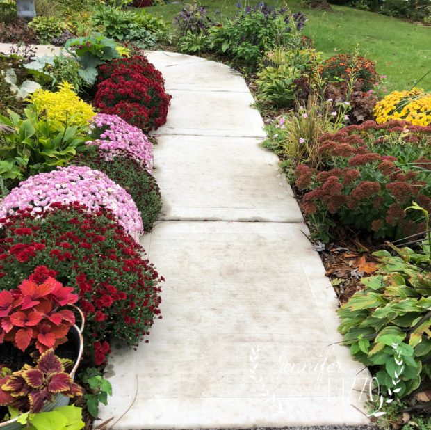 Front walk with mums for fall. Pretty fall landscaping