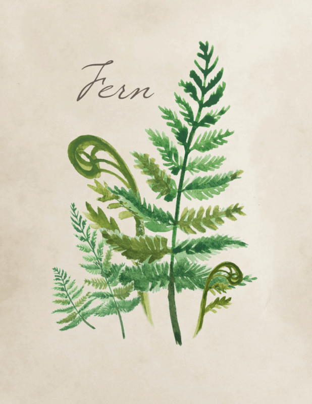 Free botanical fern printable by Jennifer Rizzo
