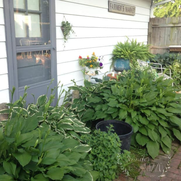 Midwest landscaping with hostas