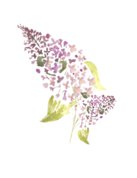 Free Watercolor Lilac Printable for personal use by Jennifer Rizzo