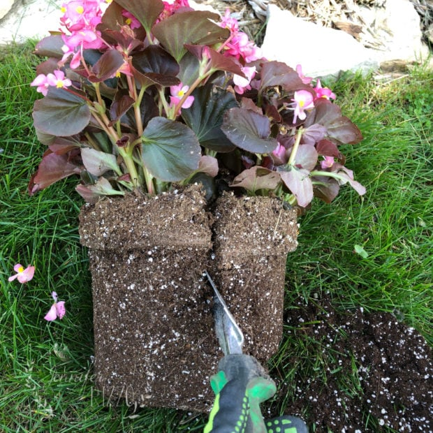 Use a serrated edge trowel ls to break up a potted plant