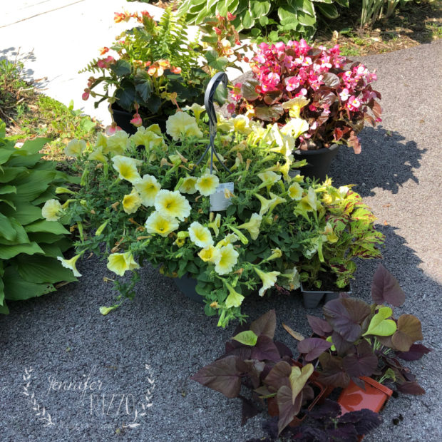 Save money on planting with grocery store hanging baskets