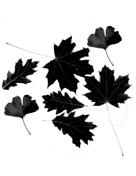 Printable black and white leaf template Jennifer Rizzo Blog