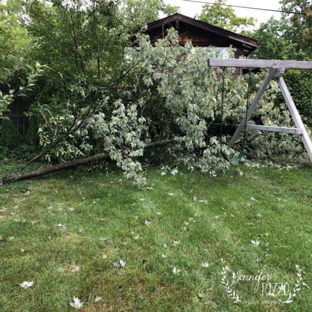 Fallen tree branch from storm