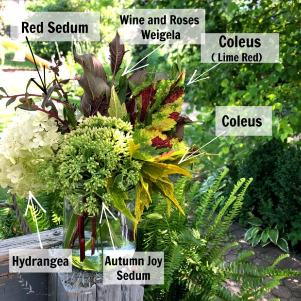 Flower arrangement for plants that grow roots