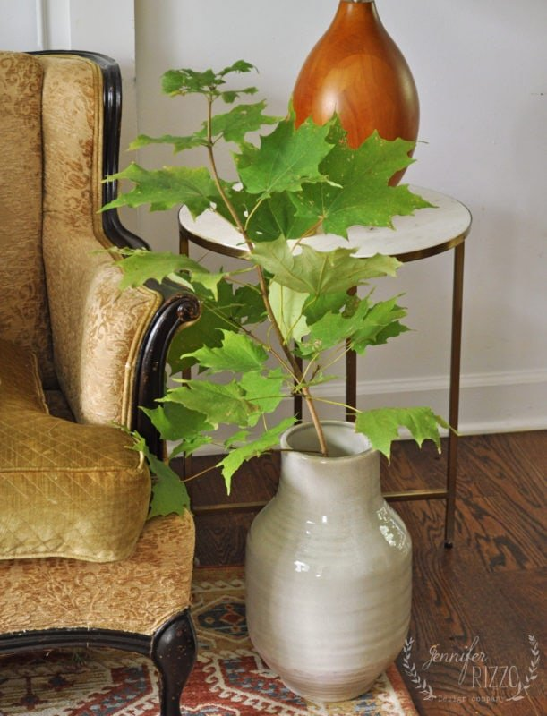 Maple tree volunteer seedling in a vase