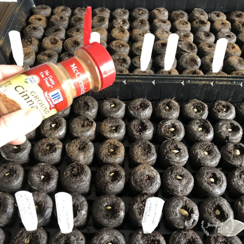 Sprinkle cinnamon on peat pots when starting seedlings to help prevent damping off